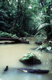 Forest Stream. Stream in a tropical rainforest royalty free stock images