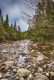 Forest Stream Lizenzfreie Stockbilder