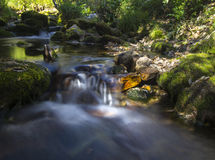 Forest Stream Images stock