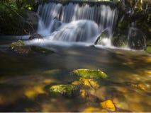 Forest Stream Fotos de Stock Royalty Free