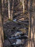 Forest Stream Images libres de droits