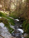 Forest Stream Photo stock