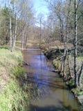 Forest Stream Stockfotografie