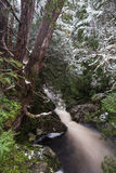 Forest stream along the Enchanted Walk in Cradle Mountain NP Stock Photos