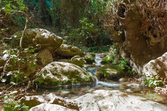 Forest stream Amud in Israel Stock Photos