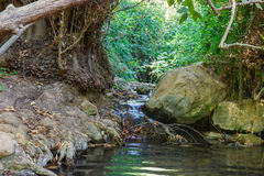 Forest stream Amud in Israel Stock Images