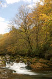 Forest and stream in autumn Royalty Free Stock Photo
