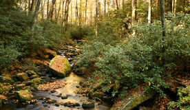 Forest Stream in Autumn Stock Image