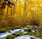 Forest Stream in Autumn. Steam in the forest with fall colors and foliage Royalty Free Stock Photo