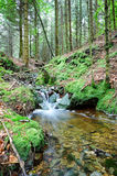 Forest stream at autumn day Stock Photography