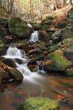 Forest stream in autumn light Stock Photo