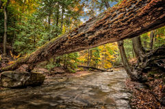 Forest Stream In Autumn. An old fallen tree crossing Sulpher Springs Creek in Ohio during peak fall colors. Located in the South Chagrin Reservation Cleveland royalty free stock photo