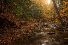 Forest Stream In Autumn. Sulpher Springs Creek in Ohio during peak fall colors. This small creek looks it's best with peak autumn colors in the trees. Located in royalty free stock image