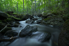 Forest Stream. A beautiful, lonely forest stream deep in the woods in the state of Maine Stock Photo