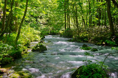 Forest stream. Beautiful stream in spring forest Stock Photography