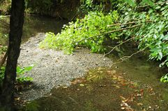 A forest stream with a bed of pebbles. Royalty Free Stock Photos