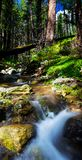 Forest stream in Big Sur royalty free stock photography