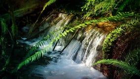 Forest Stream bonito vídeos de arquivo