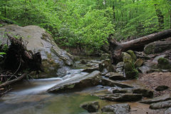 Forest stream through boulders Royalty Free Stock Photo