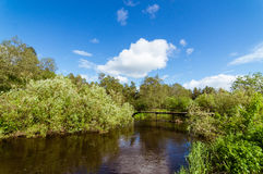 Forest stream with a bridge in the summer, Stock Images