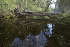 Forest stream and broken tree Royalty Free Stock Images