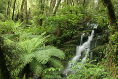 Forest stream cascading over mossy rocks stock photography