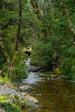 Forest stream. A crystal clear stream meanders between the trees Royalty Free Stock Photo