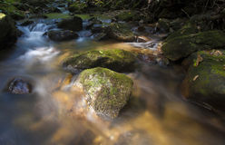 Forest stream and daylight Royalty Free Stock Images
