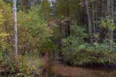 Forest stream in early autumn royalty free stock photography