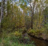 Forest stream in early autumn royalty free stock photo