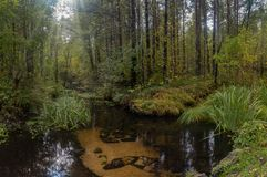 Forest stream in early autumn royalty free stock photos