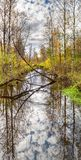 Forest stream in early autumn stock photo