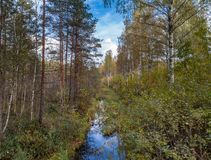 Forest stream in early autumn royalty free stock image