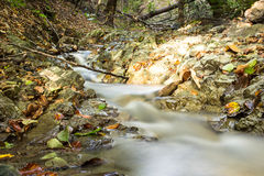 Forest Stream en automne Images libres de droits