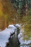 Forest Stream en hiver photo libre de droits