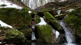 Forest Stream en invierno almacen de video