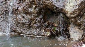 Forest Stream en invierno almacen de metraje de vídeo