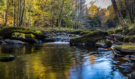 Forest stream in fall Royalty Free Stock Photo