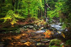 Forest Stream With Fallen Tree Stock Photography