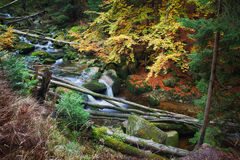 Forest Stream With Fallen Trees Royalty Free Stock Images