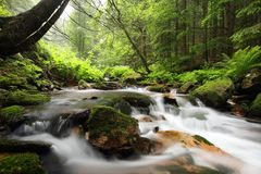 Free Forest Stream Flowing Down From The Mountain Slope A Brook Over Stones Covered With Moss Among Spring Beech Trees Of Pradziad Is Stock Photo - 139566750