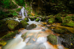 Forest stream. Flowing over mossy rocks Stock Photo