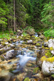 Forest river. Forest stream flowing between the stones stock images