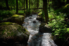 Forest stream. A fresh forest stream in sunlight stock photography