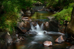 Forest stream. A fresh forest stream in sunlight stock image
