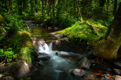 Forest stream. A fresh forest stream in sunlight royalty free stock photography