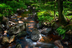Forest stream. A fresh forest stream in sunlight royalty free stock photo
