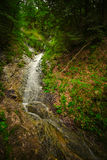 Forest Stream Stock Images