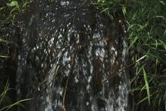 Forest stream between green grass.  Royalty Free Stock Images