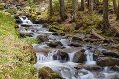 Forest river. Forest stream of green stones stock photos